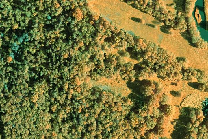Metsanduslik valevärvi (CIR-NGR) ortofoto